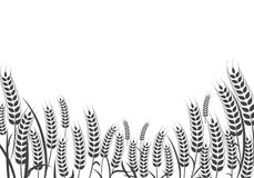 Agriculture wheat vector Illustration design. Agriculture wheat Background vector icon Illustration design Royalty Free Stock Photos
