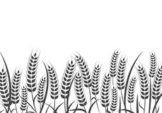 Agriculture wheat vector Illustration design. Agriculture wheat Background vector icon Illustration design Royalty Free Stock Images