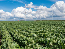 Agriculture and wind turbines in polder, Holland Stock Image