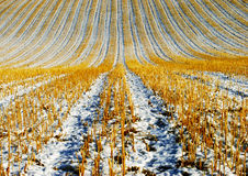 Agriculture Winter stock photography