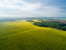 Agriculture yellow fields aerial view. Sunny day over fields. Ae. Rial drone agricultural background Royalty Free Stock Photos