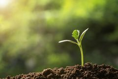 agriculture. young plant growing on soils stock images