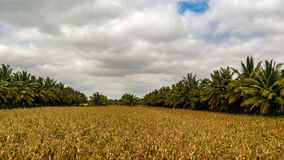 Agricultureland Стоковое Изображение