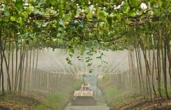 Agriculturist работает в саде стоковая фотография