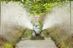 Agriculturist работает в саде стоковое изображение