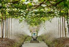 Agriculturist работает в саде стоковая фотография rf