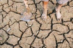 agriculturist успешный стоковое фото rf