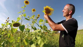 Agriculturist Checking His Sunflowers stock footage
