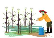 Agriculturist fertilizer corn plant. Design Royalty Free Stock Image