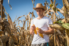 Agriculturist in field Royalty Free Stock Photo