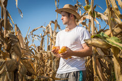 Agriculturist in field Royalty Free Stock Photos