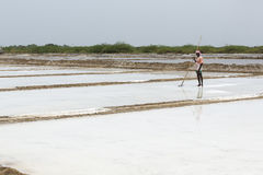 Agriculturist is harvesting salt farm, Pondicherry arera Royalty Free Stock Images
