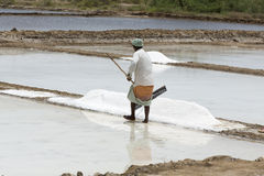 Agriculturist is harvesting salt farm, Pondicherry arera Stock Photography
