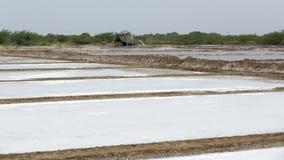 Agriculturist is harvesting salt farm, Pondicherry arera Stock Images