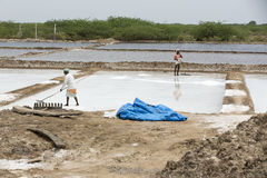 Agriculturist is harvesting salt farm, Pondicherry arera Royalty Free Stock Photo