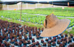 Agriculturist hat Stock Photo