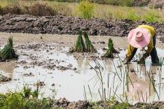 Agriculturist przeszczep Zdjęcia Stock