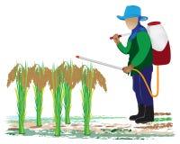 Agriculturist sprays rice Royalty Free Stock Photos