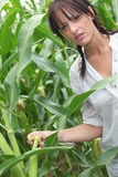 Agriculturist Stock Image