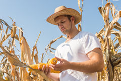 Agriculturist w polu Obrazy Stock