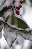 Agrifoglio con le bacche rosse coperte in neve fotografie stock