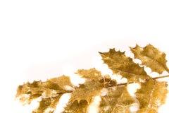 Agrifoglio dorato Immagine Stock Libera da Diritti