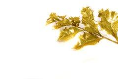 Agrifoglio dorato Fotografia Stock