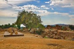 agrigento dei sławnego greckiego heracles dziedzictwa wyspy Italy resztek Sicily miejsca świątynny templi unesco Valle świat Vall Zdjęcie Royalty Free