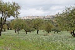 Agrigento Fields Sicily Italy Stock Photo