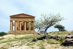 agrigento grecki oliwny świątynny drzewo Fotografia Royalty Free