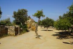 Agrigento, Sicily, Włochy, dolina świątynie Zdjęcia Stock