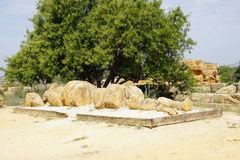 Agrigento, Sicily, Włochy, dolina świątynie Obraz Royalty Free