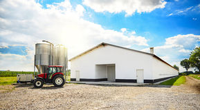 Agriiculture Zdjęcie Stock