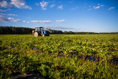 Agrikultura tractor cultivates the soil on the field.  Royalty Free Stock Photos