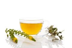 Agrimonia eupatoria kwiat i filiżanka herbata Zdjęcie Stock
