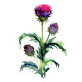Agrimony, bur buds and flowers, burdock head isolated, watercolor illustration on white Stock Image