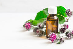 Agrimony burdock Essential oil In small bottle. Flowers spikes and leaves.  stock photo