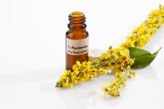 Agrimony, fiore del bach, boccetta del farmacista Fotografia Stock