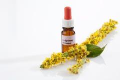 Agrimony, fleur de bach, flacon d'apothicaire Photo stock