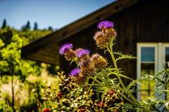 Agrimony kwiat w Guernewood parku Zdjęcia Royalty Free