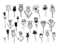Agrimony plants collection, sketch for your design Stock Images
