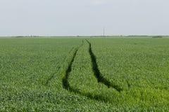 Agrimotor slingor i ett vetefält Arkivfoton