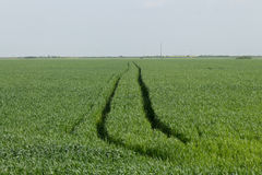 Agrimotor trails in a wheat field. Trails left by an agrimotor in a wheat field Stock Photos