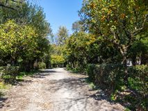 Agrinio`s central park royalty free stock image