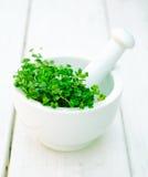 Agrião de jardim Imagens de Stock