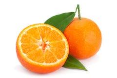Agrios de la clementina en blanco fotografía de archivo