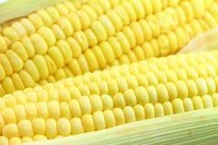 agro индустрия мозоли обрабатывая помадку Стоковое Изображение RF