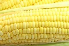 agro индустрия мозоли обрабатывая помадку Стоковое Изображение