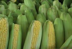 agro индустрия мозоли обрабатывая помадку Стоковые Фотографии RF