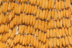 agro havreindustri som behandlar sötsaken Royaltyfri Bild